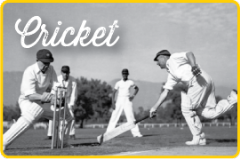 View the Image gallery : Cricket